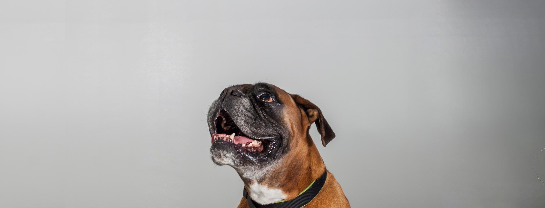Tandem - Educateur canin à St Marcel sur Aude proche de Narbonne